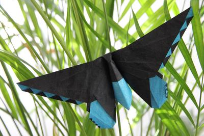/images/origami/2019/02/Birdwing.Butterfly.thumbnail.jpg